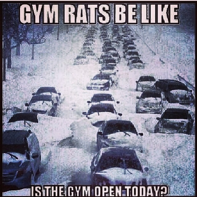 gym-rats-be-like